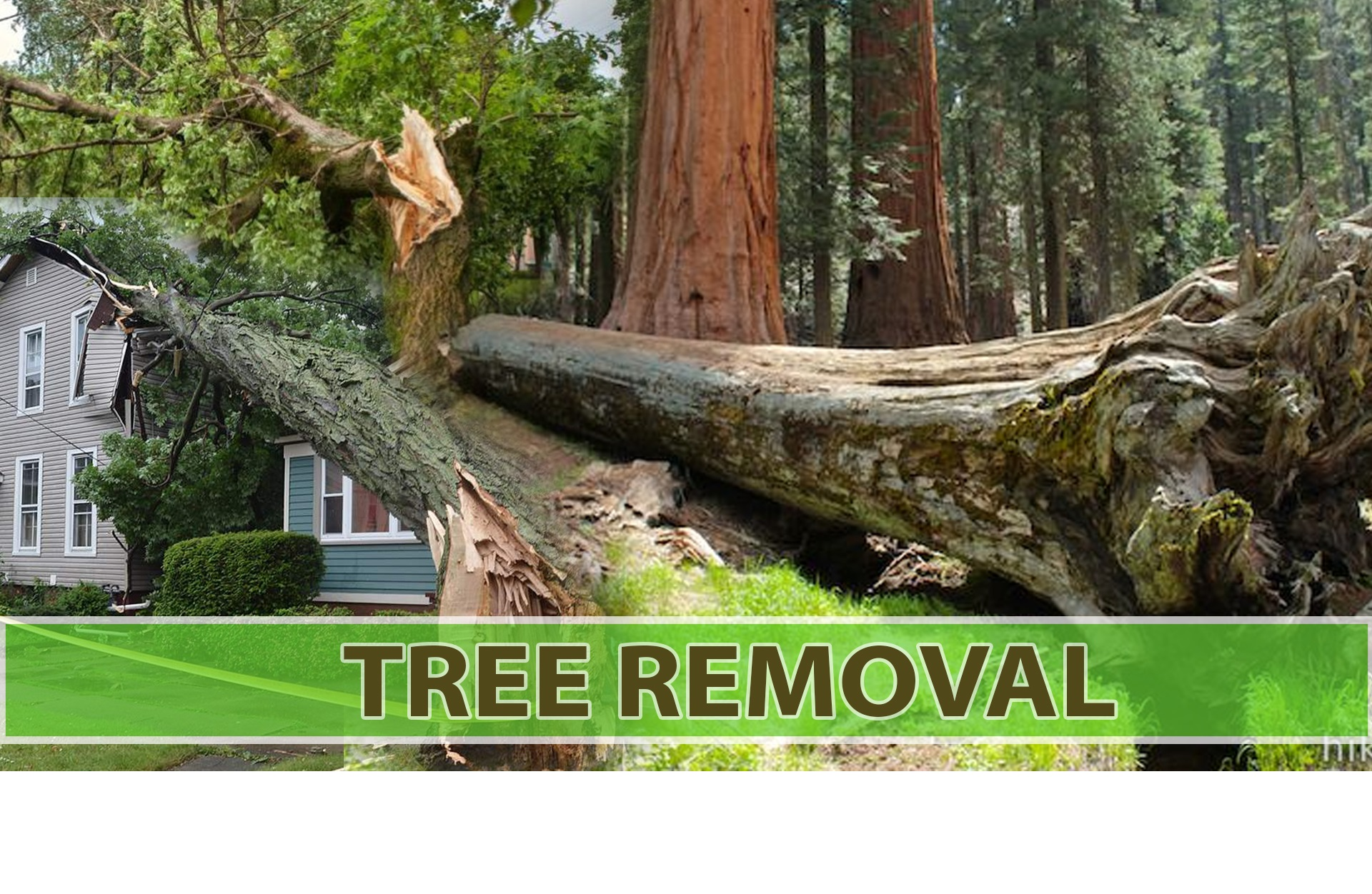 Tree Caring Service in Toronto
